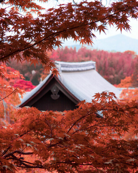 Vibrant red autumn leaves in Kyoto