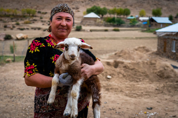 person holding goat in tajikistan mountains