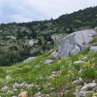 hillside with wildflowers and boulders