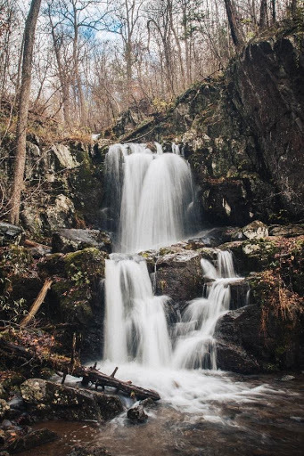 cascading waterfall with trees above