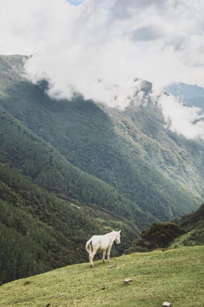 Rural scene in Colombia