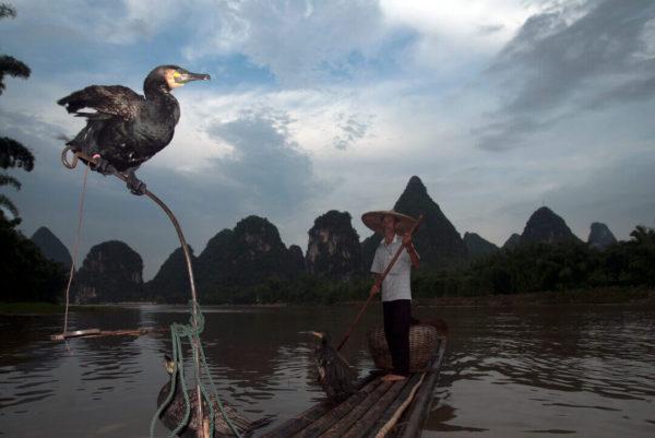 cormorant fisher along Li River with Kast Mountain backdrop