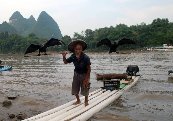 man practicing cormorant fishing along Li River