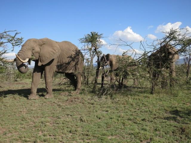 Mara-Naboisho-Conservancy-Kenya