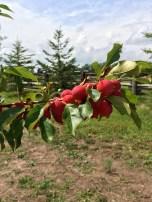 spirit-tree-cidery