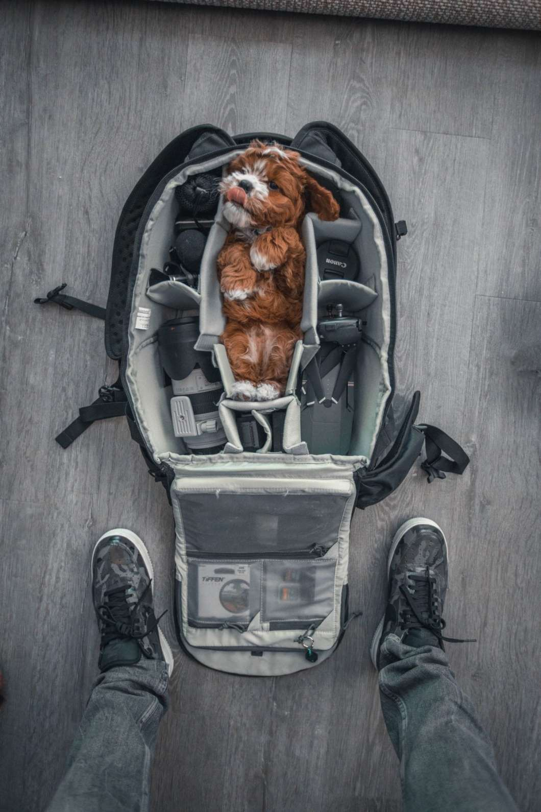 Pet Friendly Airbnb