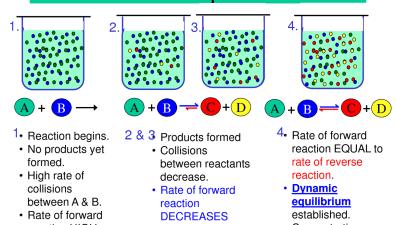 Chemical Equilibrium | Passnownow