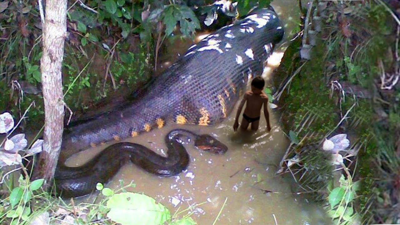 How the World's Biggest Snake was Killed | Passnownow