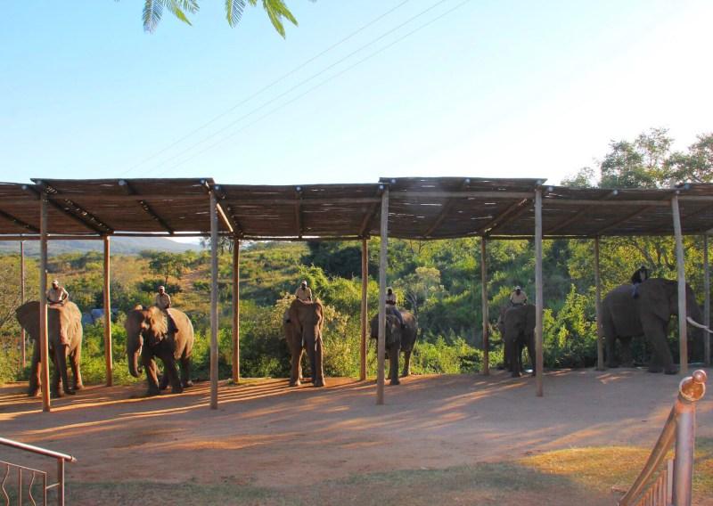 Elephant interaction in Hazyview