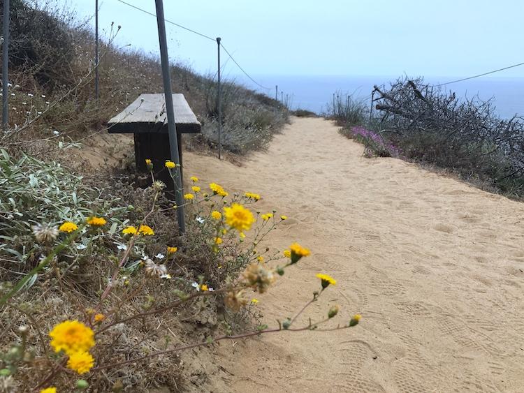 San Diego Torrey Pines State Reserve