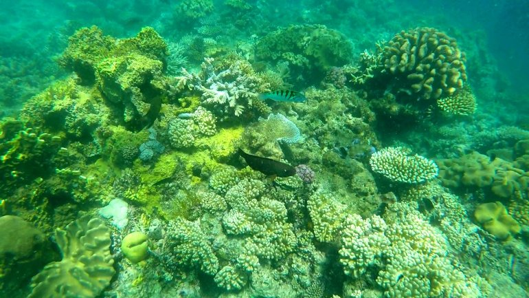 Great Barrier Reef Bleaching #travel #lessons #lifelessons #gratitude #blessings #wanderlust #selfdevelopment #greatbarrierreef #sustainability #ecofriendly #saveourplanet #coralreef #blueplanet