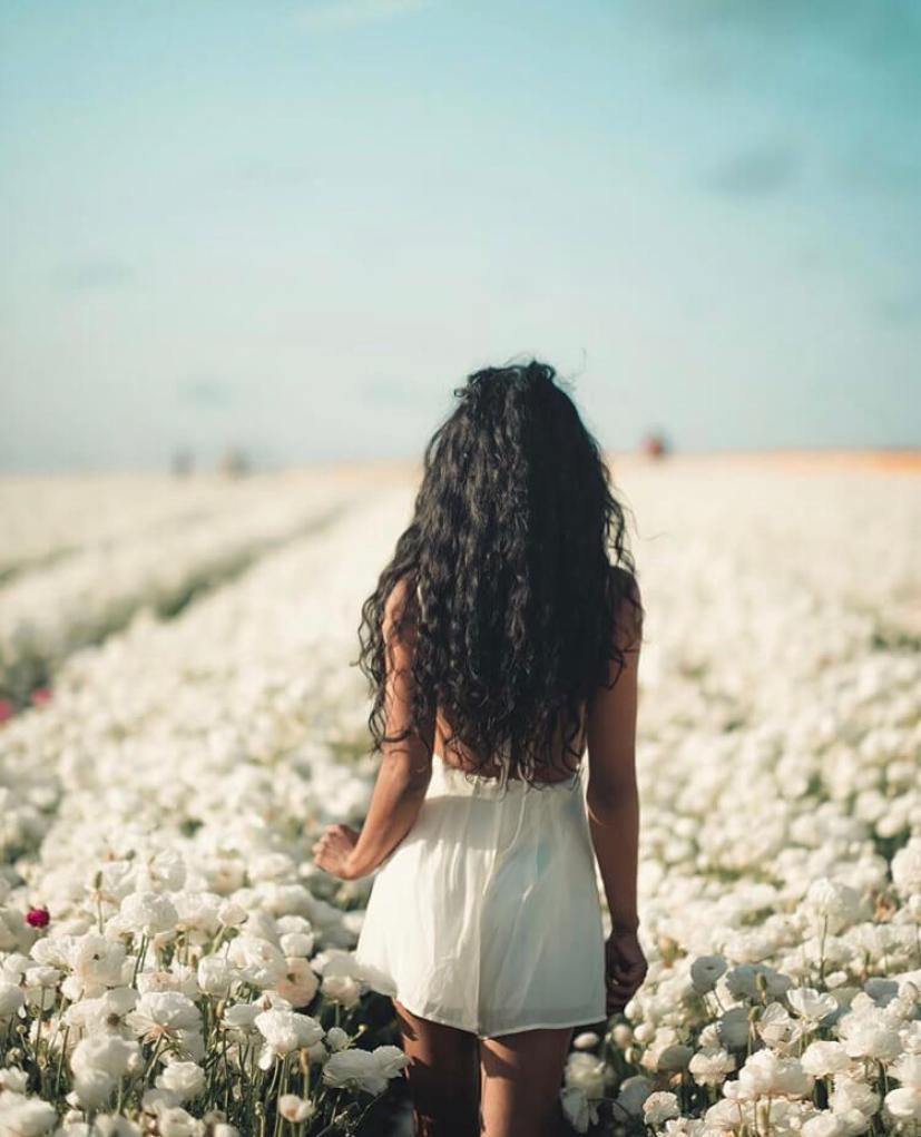 campo flores carlsbad san diego