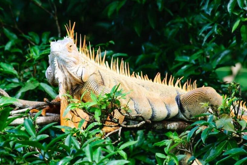 safari adventure park liberia costa rica