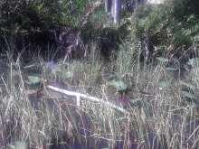 swamp, Hugo Morel