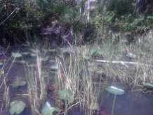 shallow water, Hugo Morel