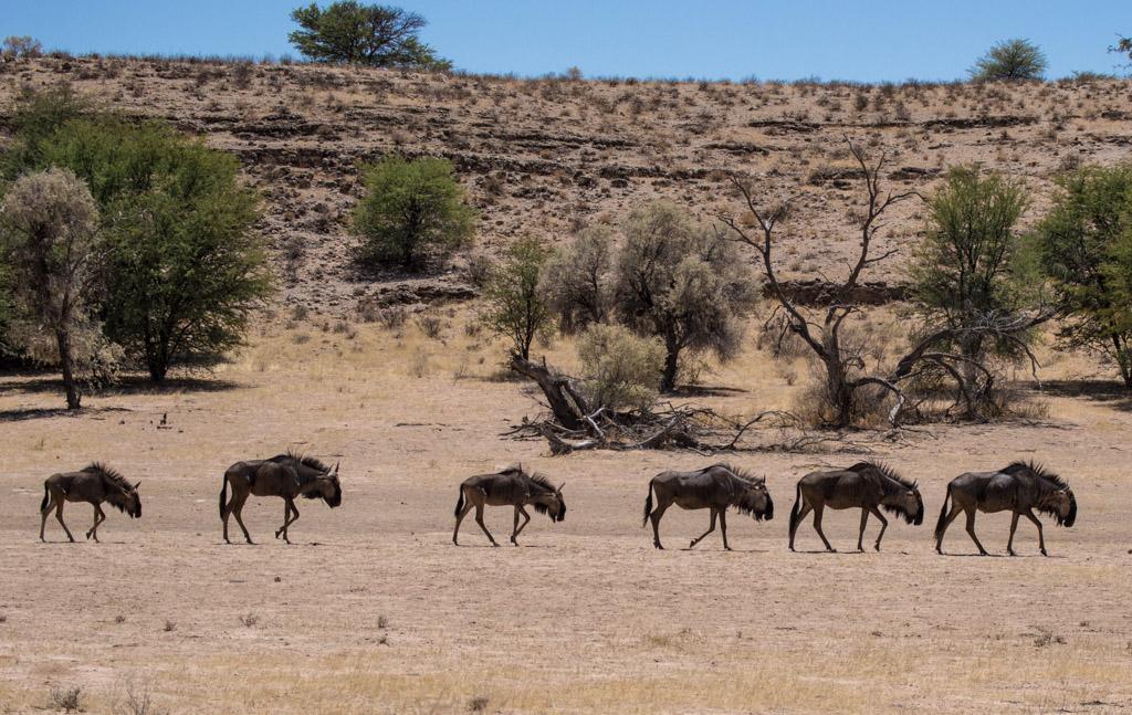 Kgalagadi Transfrontier National Park