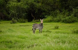 mountain-zebra-national-park-12