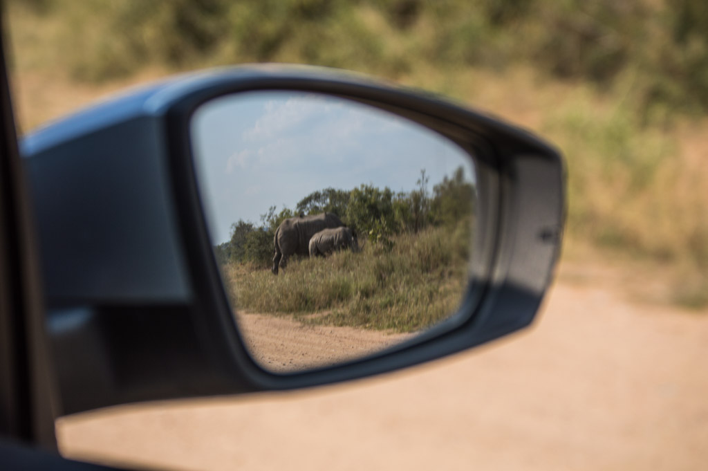 The best view- white rhinos!