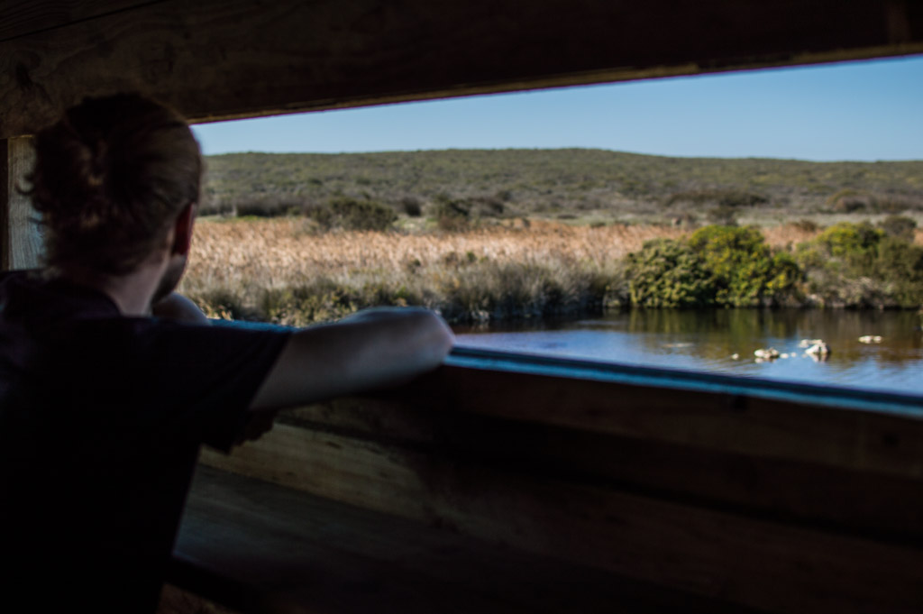 Overlooking a watering hole that is a great spot for birding!