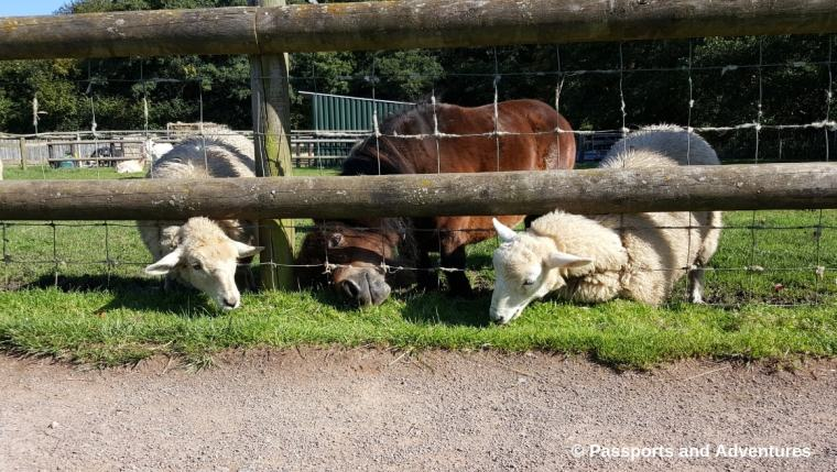 Cefn Mably Farm Park With Kids - A great family day out in South Wales.
