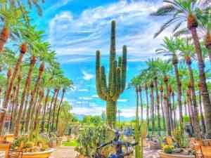 Hyatt Regency Scottsdale Cactus