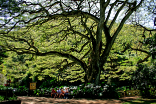 Our family under the shade of the giant Monkey Pod Tree
