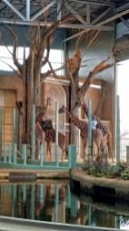 Giraffes, Calgary Zoo