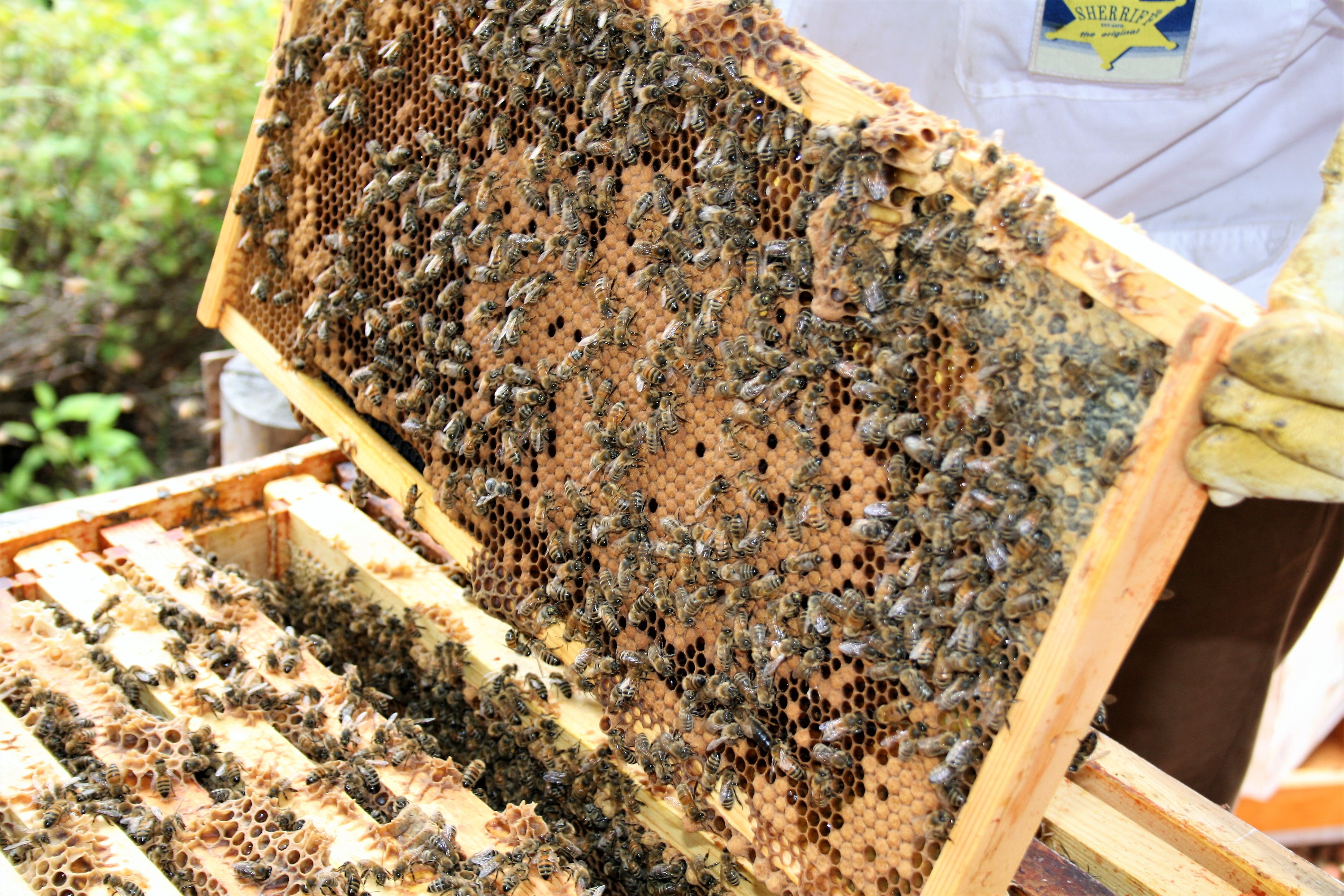 The Bee Hives at Fairmont Hotel Macdonald
