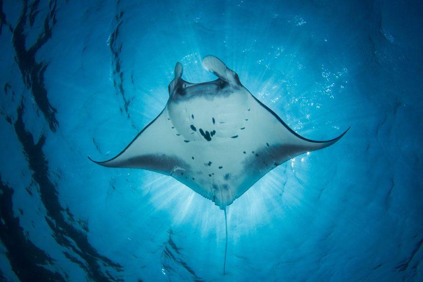 9 day hawaii intinerary manta ray