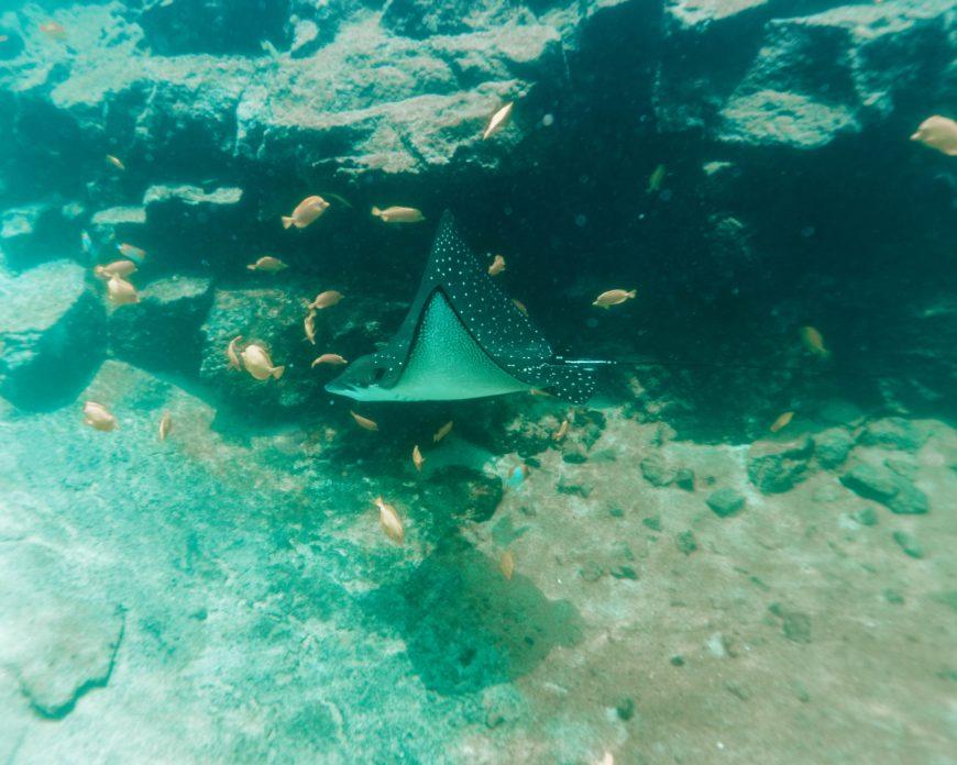 Four Seasons Resort Hualalai activities