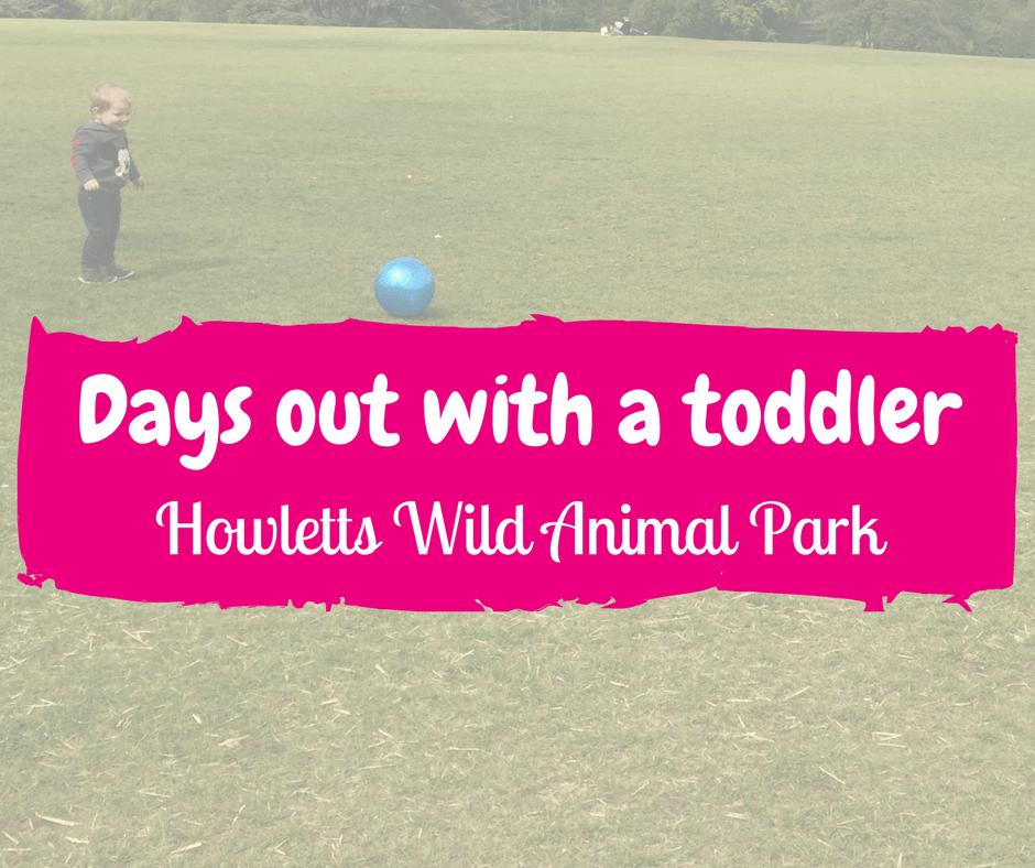 Days out with a toddler: Howletts Wild Animal Park