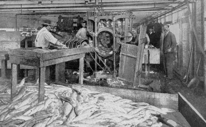 Iron Chink BC Salmon cannery 1909