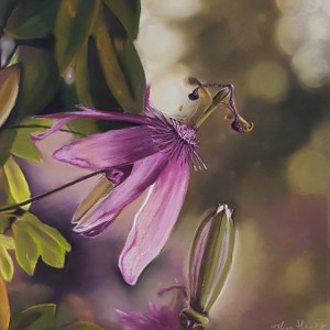 pastel painting of a passiflora