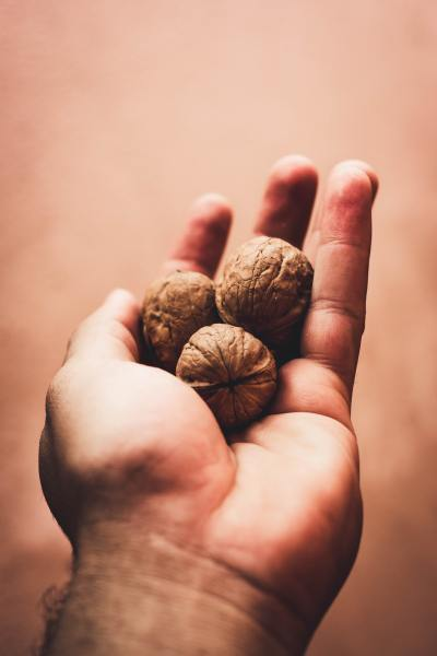 three-walnuts-on-left-palm-2856824