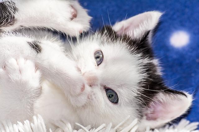 chaton heureux