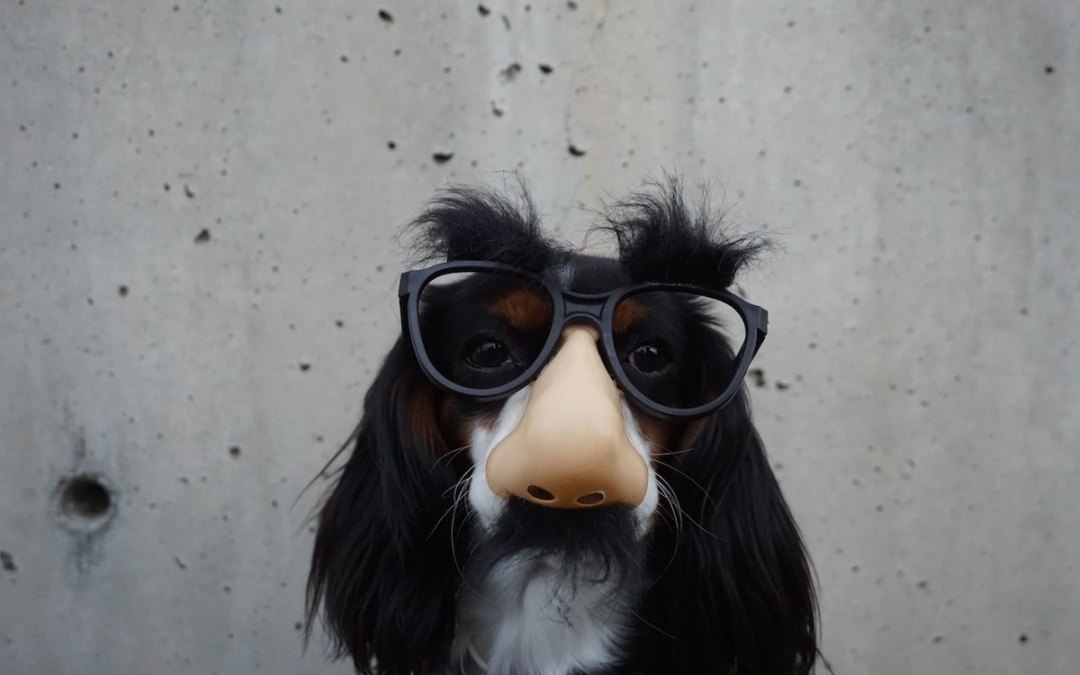 humor in the church dog with funny glasses
