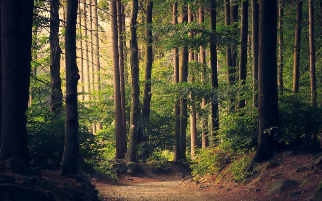 Appreciating nature in your backyard