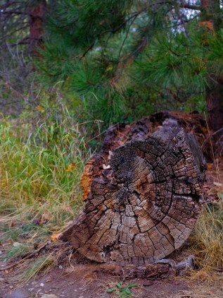 A log decomposing in the forest