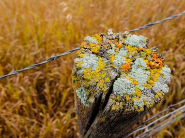 Moss or Lichen growing on the top of a fence post