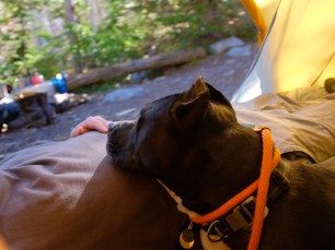enjoying a liesurely cat nap out in the woods in our big agnes slater 4 tent