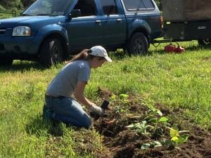 Soph planting