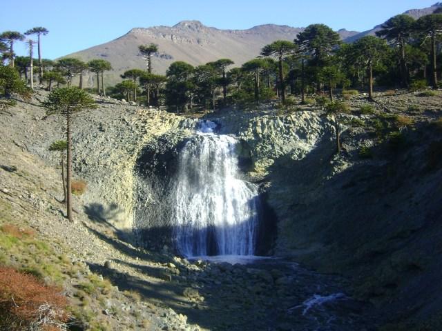 Fuerte caída de agua en un sector rodeado de araucarias parte del recorrido del sendero de las cascadas de Caviahue.