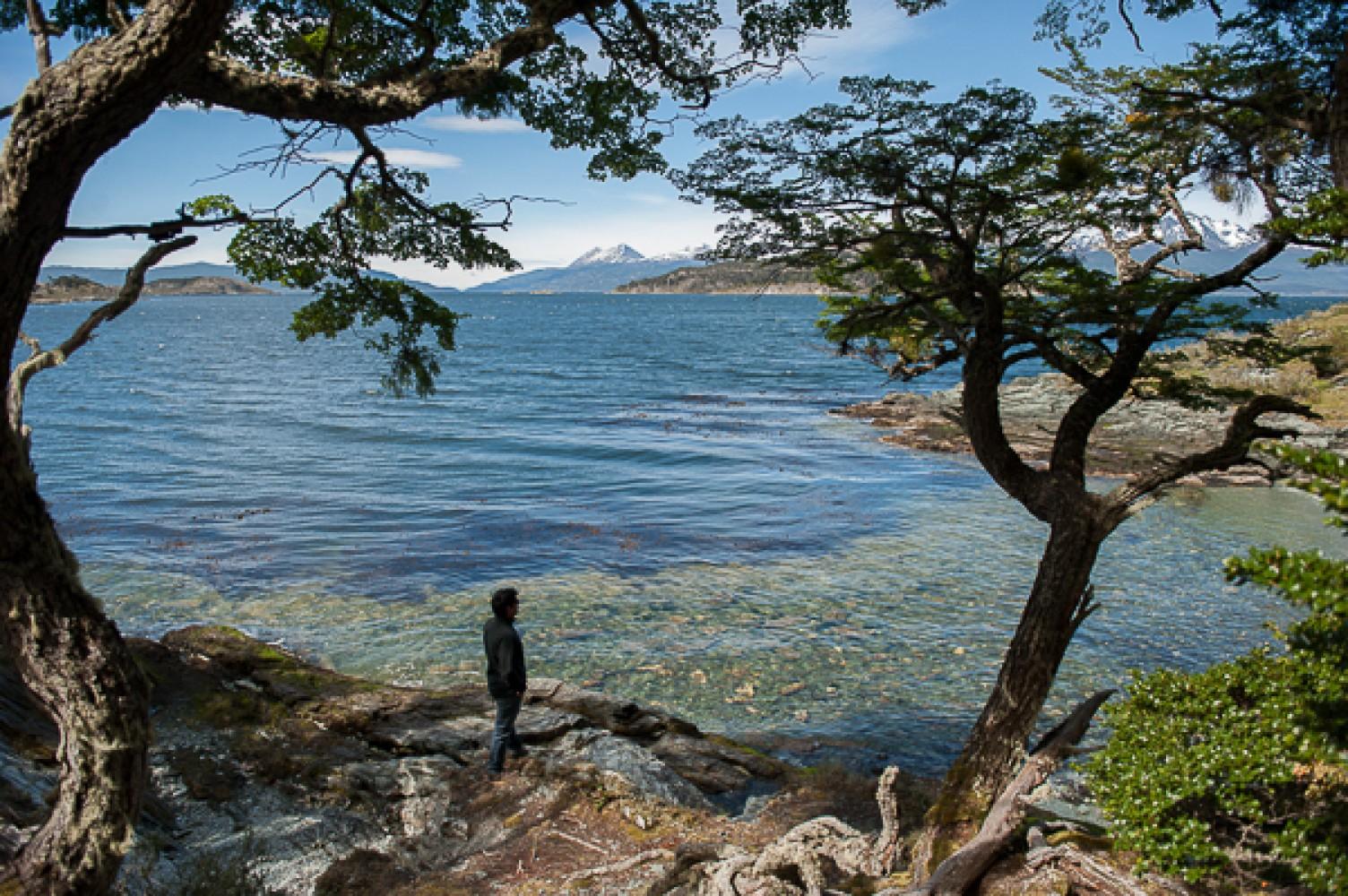 Persona contemplando el lago, rodeado de árboles en Tierra del Fuego en verano.