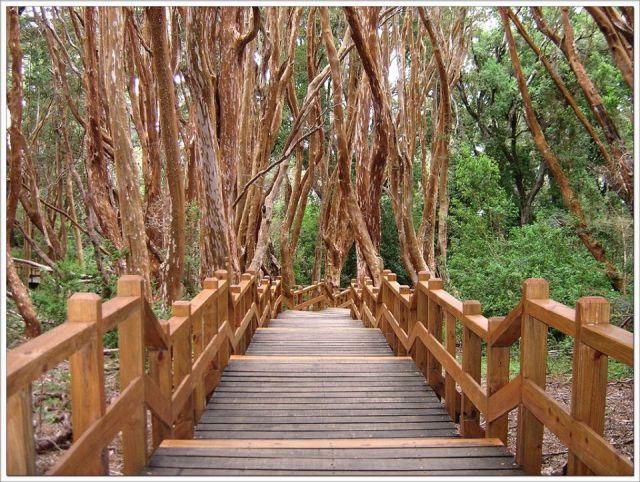 Sendero escalonado del ingreso al Parque Nacional Arrayanes