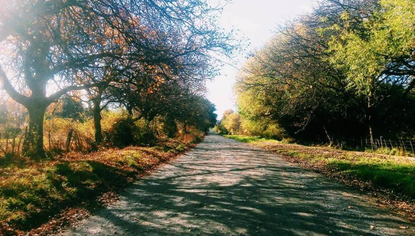 Camino de los Nogales, El Bolsón.