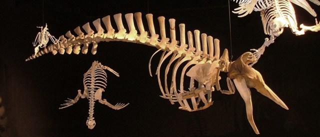 Museo paleontológico de Bariloche.