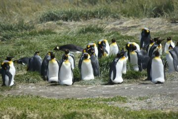 Things to do in Punta Arenas, Chile