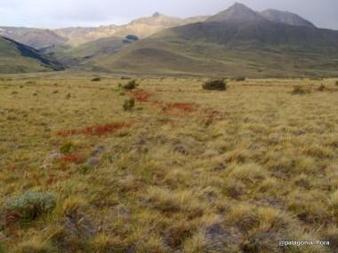 fitz-roy-patagonia-wildflowers-chalten