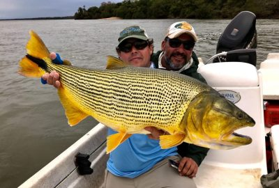 golden dorado fly fishing in Argentina