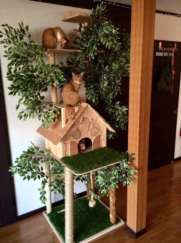 verticalização para gatos